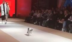 VIDEO Ova mačka se prošetala modnom pistom i potpuno zasjenila modele