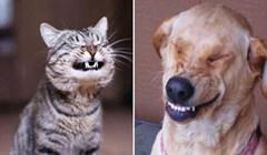 Ove životinje izgledaju kao da su upravo čule najsmješniji vic