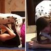 VIDEO Znatiželjni dalmatiner ne pušta na miru vlasnicu koja pokušava raditi jogu