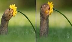 30 fotografija pokazat će vam kako izgleda život u prirodi kada nikog nema u blizini