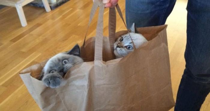 16 fotografija mačaka koje su odlučile da je njihovo mjesto u raznim vrećicama