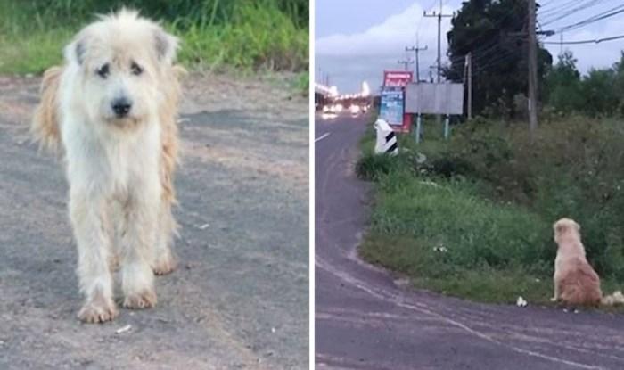 Izgubljeni pas čekao svoju obitelj na istom mjestu čak četiri godine, sada su napokon zajedno