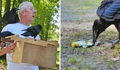 NEOBIČNI POMAGAČI U ovom francuskom parku čistoću pomažu održavati vrane