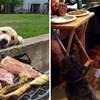 15 fotografija preslatkih ljubimaca koji uporno mole hranu svojih vlasnika