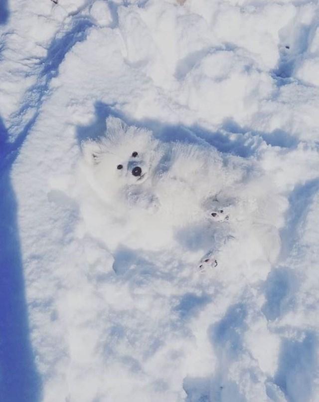"""""""Možeš li me pronaći u snijegu?"""""""