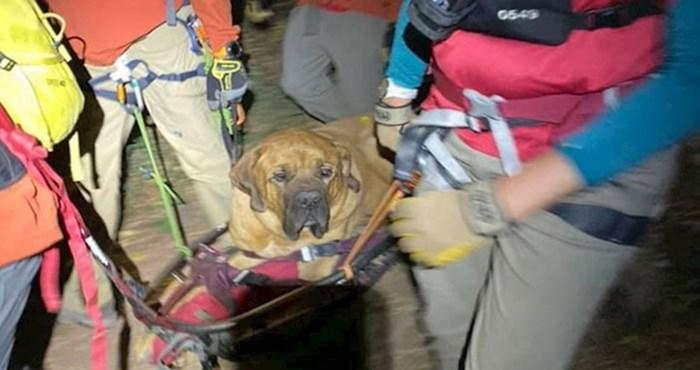 Pas težak 86 kilograma umorio se pri planinarenju, služba za spašavanje ga spuštala na dno