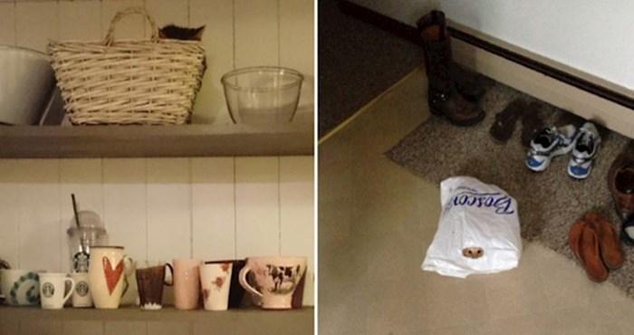 Možete li pronaći mačke skrivene na ovim fotografijama?