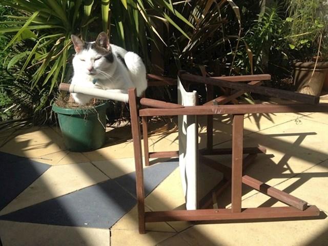 Mačke su jednostavno majstorice kršenja pravila.