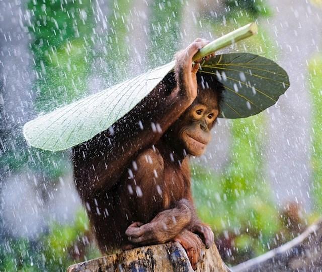 Strpljivo čeka da kiša prestane.