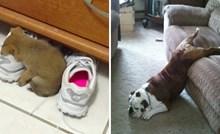 Ovi kućni ljubimci dokazali su da mogu zaspati bilo kada i bilo gdje