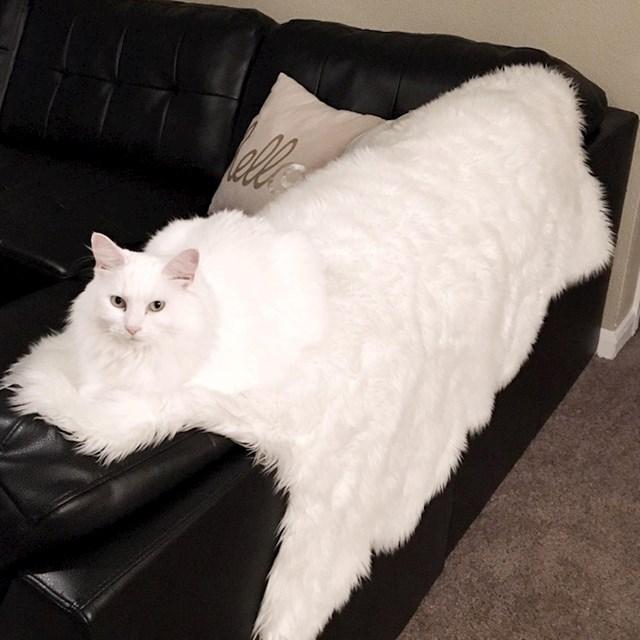 Maca koja se pretvorila u prekrivač za kauč.