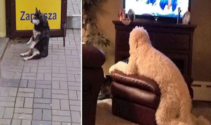 Pogledajte pse koji sjede gotovo isto kao i ljudi