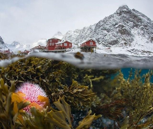 Podvodna fotografija zime u Norveškoj.
