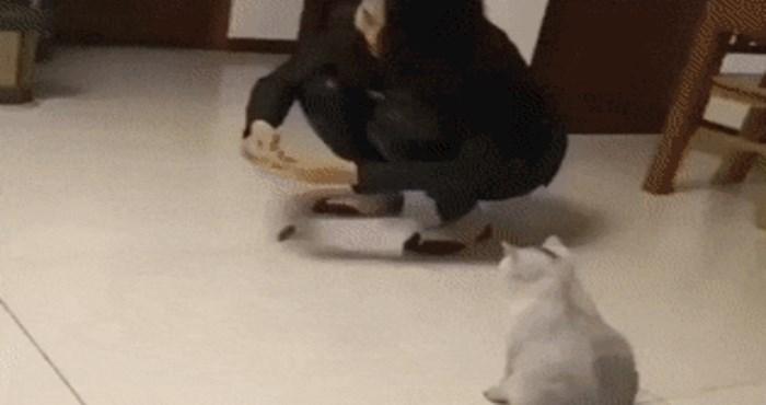 Mačka je prvi put u životu vidjela mehaničkog miša, njezina reakcija je urnebesna