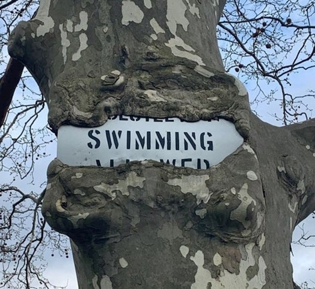 4. Ovo stablo jede znak koji je netko postavio na njega