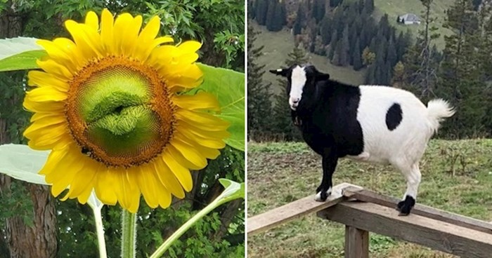 18 fotki čuda prirode koje će vam izmamiti osmjeh na lice