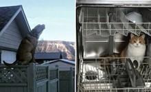 20 fotki na kojima se vidi da životinje imaju neku svoju vrstu logike