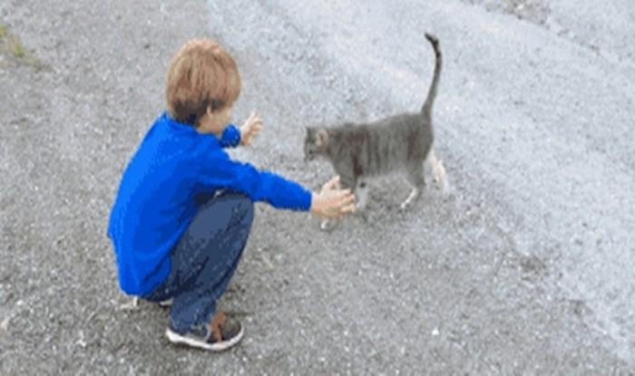Ova maca nije bila spremna na zagrljaj, ali dječak nije ostao razočaran