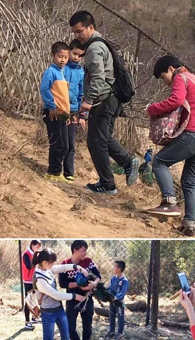 #3 Turisti proganjaju paunove i otkidaju im perje s repa u pekinškom zoološkom vrtu