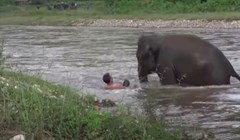 VIDEO 15 puta kad su divlje životinje spasile ljudima život