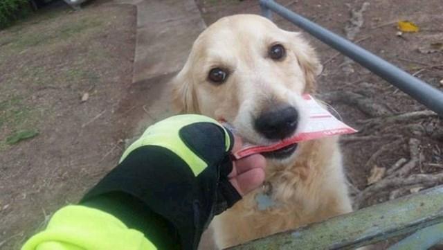 """5. """"Naš pas jednostavno obožava poštu! Čak se uspio skompati s poštarom i sad mu on svaki dan donosi prazna pisma!"""""""