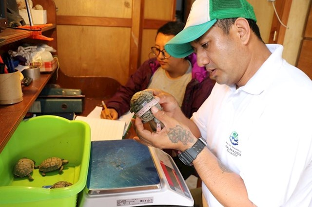 Danas je 1985 galapagoških kornjača više nego što je bilo na početku programa.