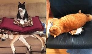 26 nemogućih mačaka koje teroriziraju svoje ukućane čim ugrabe priliku