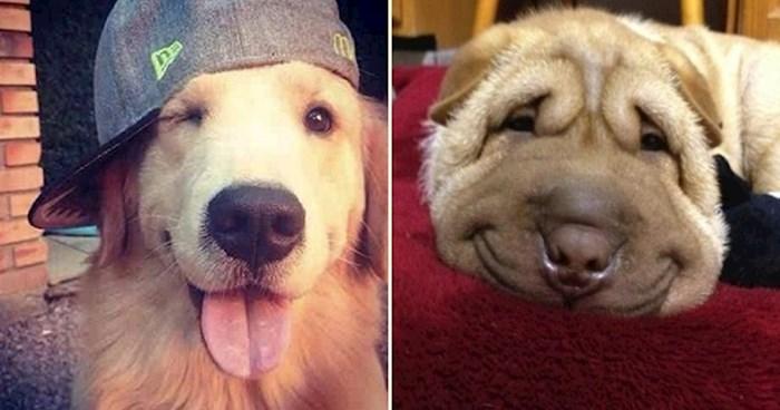 10 fotografija psećih osmjeha zbog kojih ćete nakratko zaboraviti na sve brige