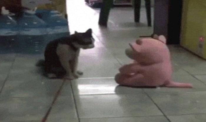 Cijeli internet smije se onome što je sumnjičava mačka napravila plišanom medvjediću