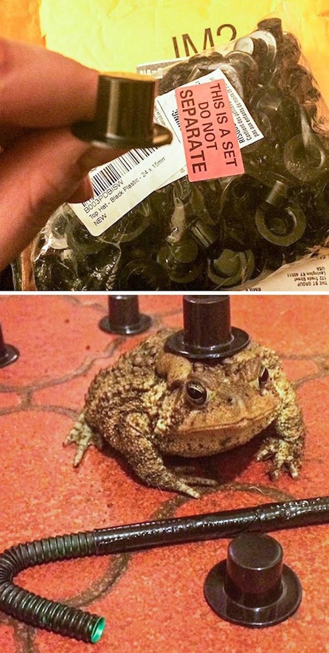 "2. ""Slučajno sam kupila svojoj žabi 100 plastičnih šeširića dok sam kupovala preko interneta nakon tuluma."""