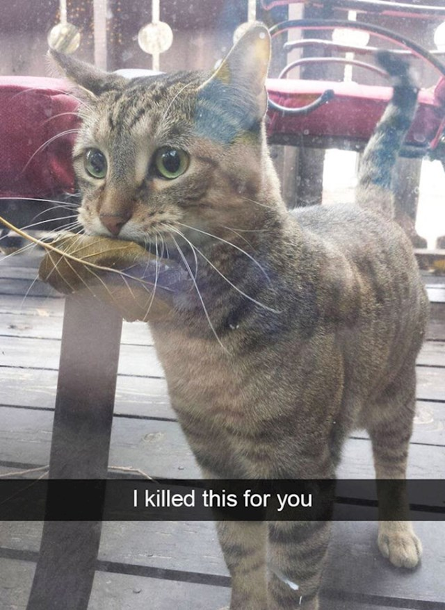 16. Ubila sam ovo za tebe!