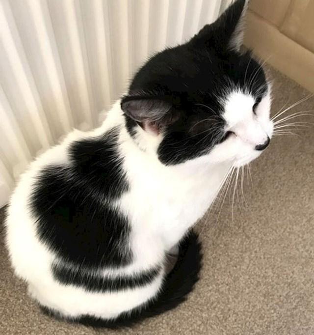Mačka na čijem krznu su obrisi druge mačke.