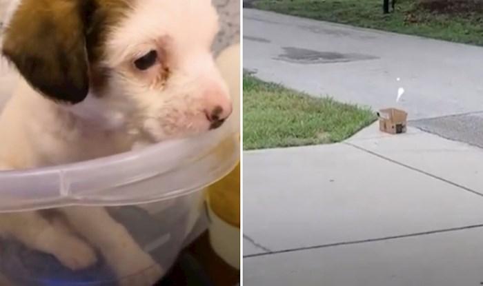 VIDEO pronašli su malenog psića u kutiji nasred ceste, njegova priča je dirljiva