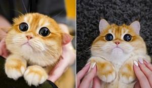 Ovo je Pisco, nova internetska senzacija koja izgleda kao Mačak u čizmama iz Shreka