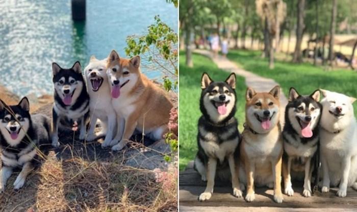 Shiba Inu Hina postala je viralni hit jer upropasti baš svaku grupnu fotku