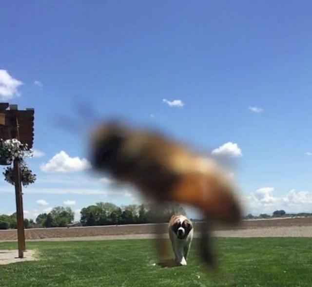 15. Pčela se ubacila u kadar u savršenom trenutku na savršen način