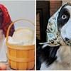 Psi koji izgledaju kao bakice s maramama zavladali Instagramom