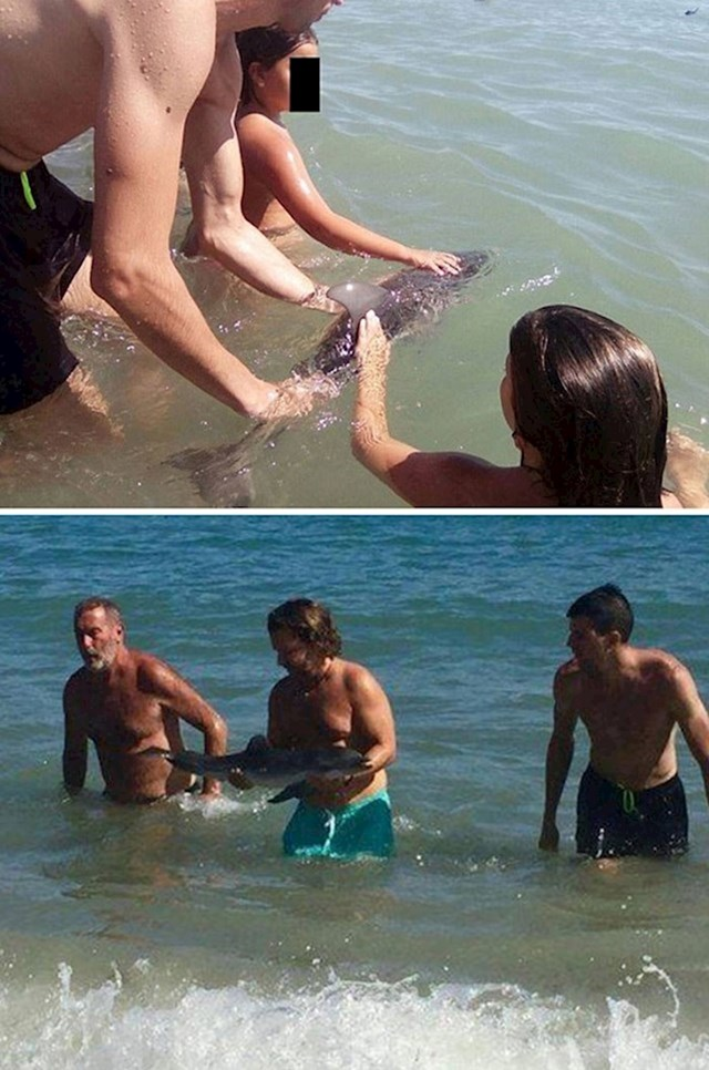 """#1 Mladunac dupina uginuo je jer su ga turisti na jednoj španjolskoj plaži """"natezali"""" kako bi se slikali s njim."""