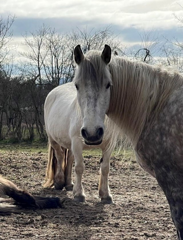 18. Koliko konja vidite na fotki?😆