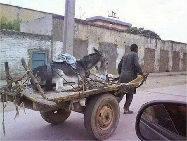 4. On vuče magarca.