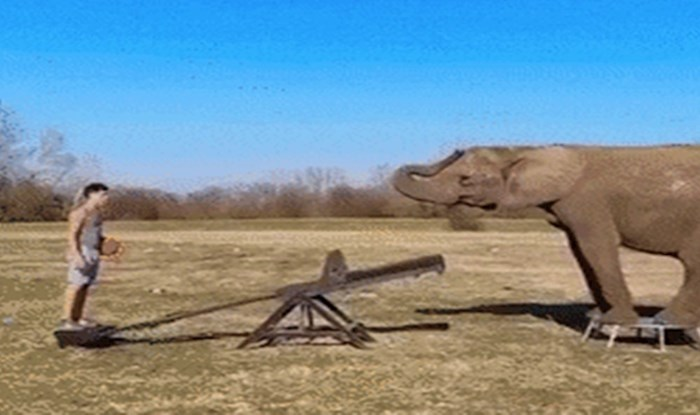 Akrobat je pomoću dva slona napravio nešto što će vas ostaviti bez teksta
