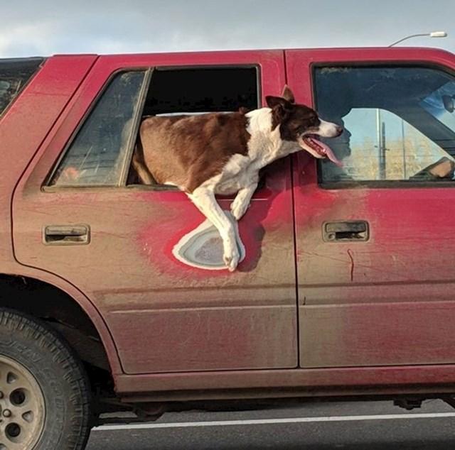 Trag od omiljene pozicije ovog psa.