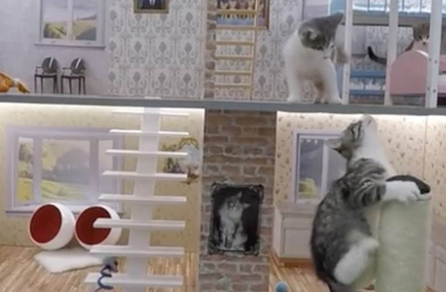 """3. Ovo je isječak iz islandske TV emisije """"Keeping up with the Kattarshians"""". Glavne zvijezde su mačke koje žive u malenoj kući. 😅"""