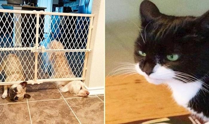 14 smiješnih fotki životinja koje su imale jako loš dan