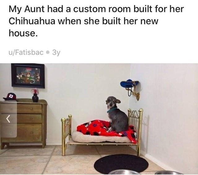 """7. """"Kad je moja teta gradila kuću, dala je napraviti posebnu sobu po mjeri njezine Čivave."""""""