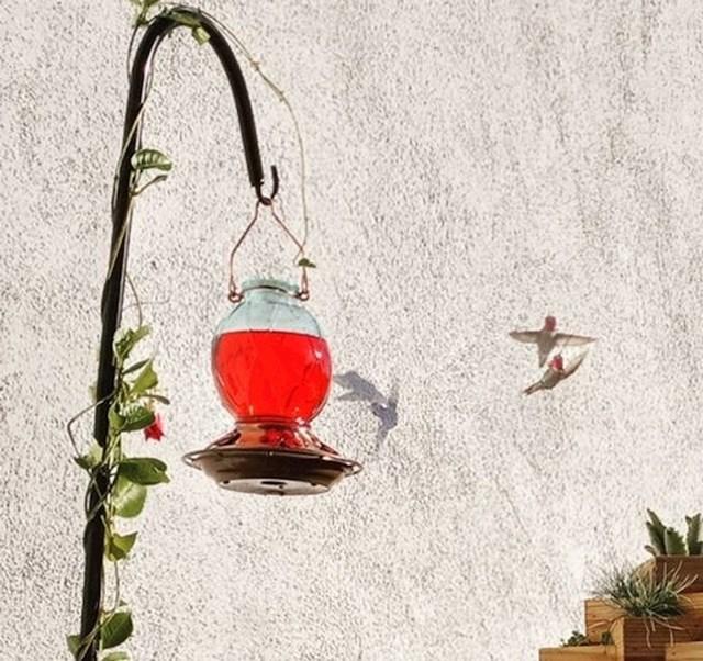 1. Htjela je fotkati kolibrića, na fotki su se zahvaljujući sjeni pojavila dva.