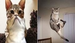 19 smiješnih fotki mačaka koje nisu mogle biti slikane u boljem trenutku