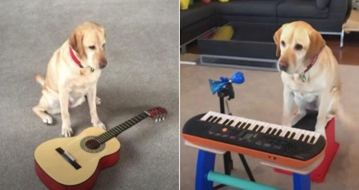 VIDEO Upoznajte Lizzy, talentiranu kujicu koja zna svirati razne instrumente
