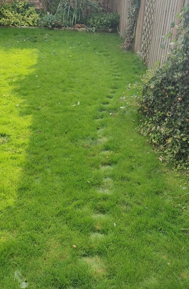 Mačke u ovom dvorištu uvijek hodaju istom rutom.