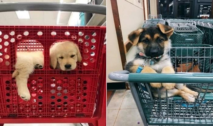20 preslatkih fotki psića u kolicima za shopping koje će vas totalno raspametiti